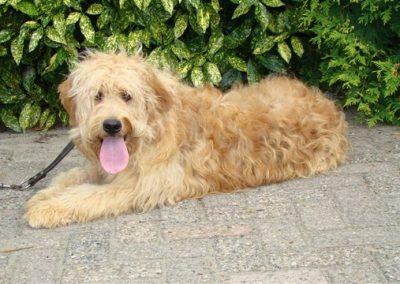 erkende-hondenfokkers