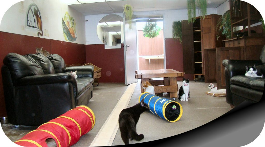 Kattenkamer