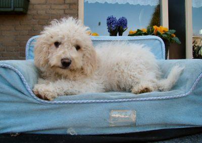 12-03-26-labradoodle curly fleece vacht