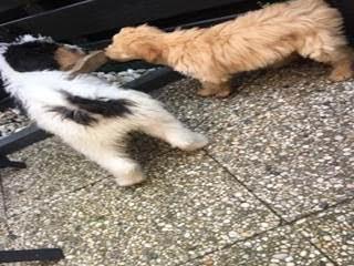 18-05-06-Daisy en Mila-03