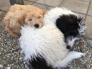 Daisy en Mila