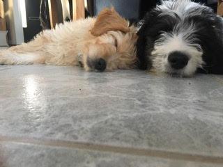 18-05-06-Daisy en Mila-05